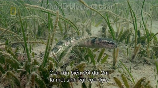 National Geographic Desert Seas (2011)